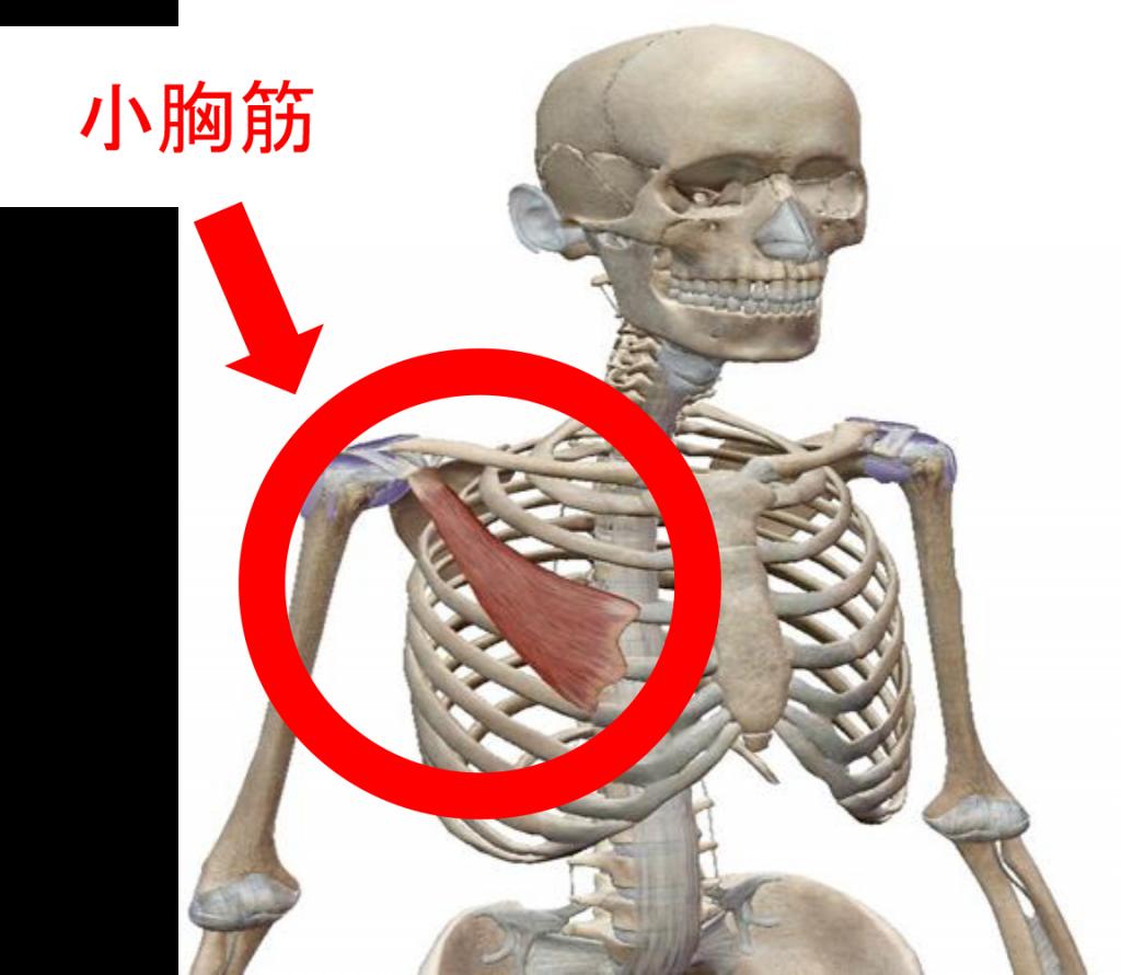 トレ 筋 肩 痛い が